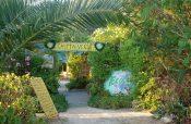 Ibiza's best charities